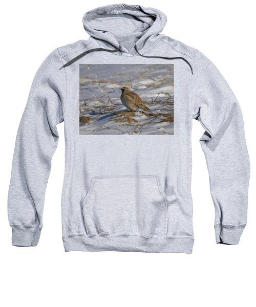 Winter Bird Sweatshirt by Jeff Swan