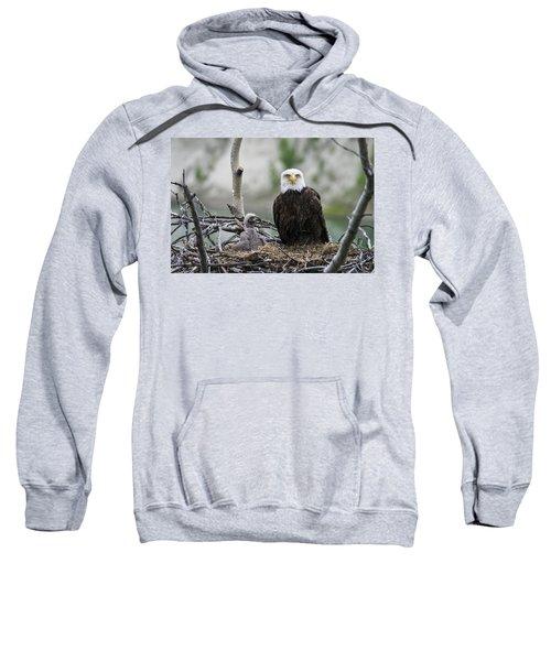 Bald Eagle Nesting Sweatshirt