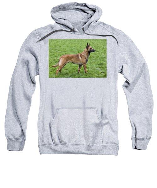 101130p020 Sweatshirt