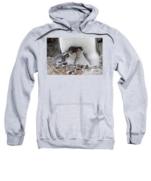 111130p166 Sweatshirt