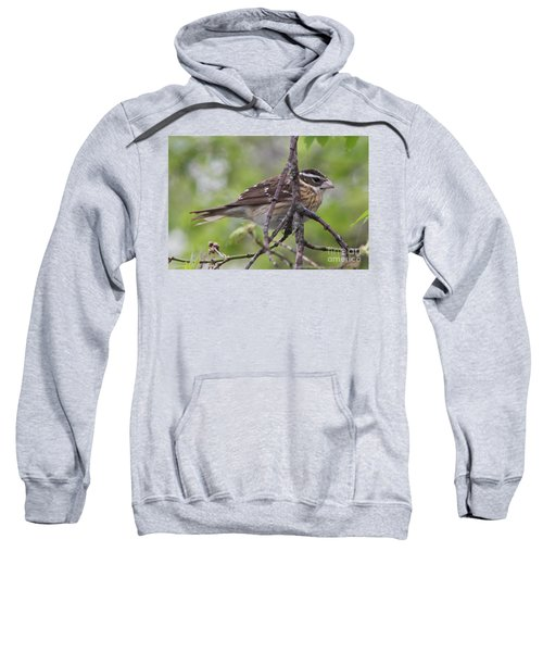 Rose Breasted Grosbeak Sweatshirt