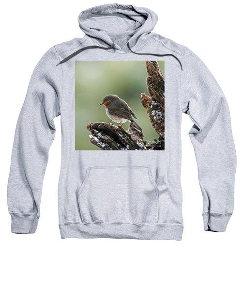 130215p300 Sweatshirt