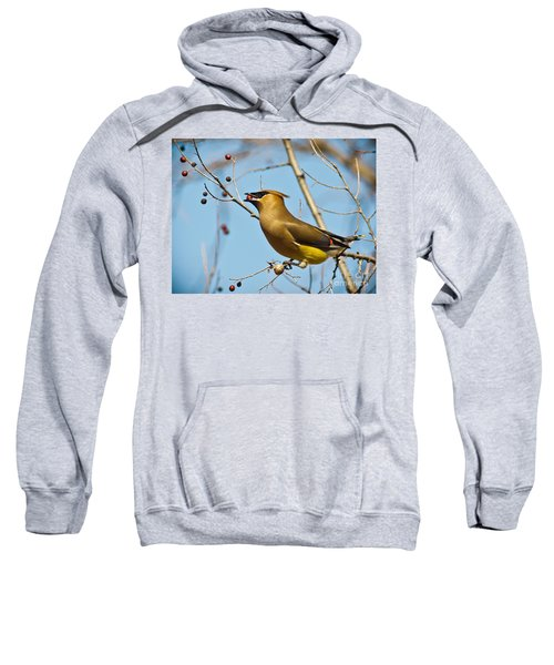 Cedar Waxwing With Berry Sweatshirt