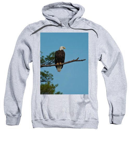 Out On A Limb Sweatshirt
