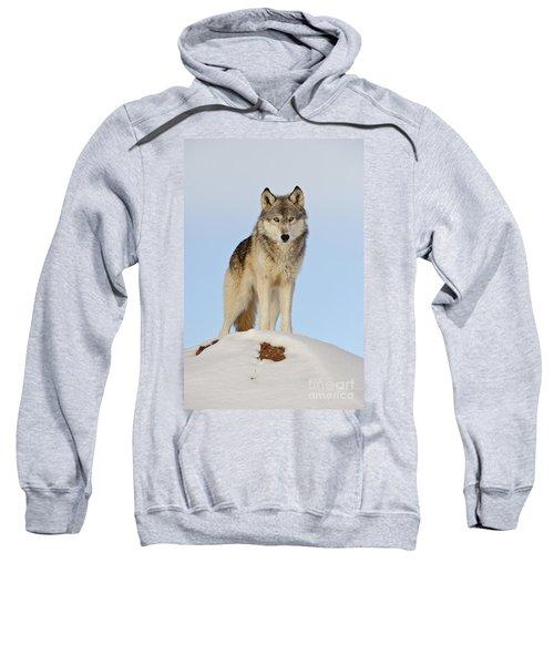 Wolf In Winter Sweatshirt