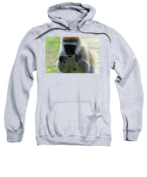 Vervet Monkey Sweatshirt