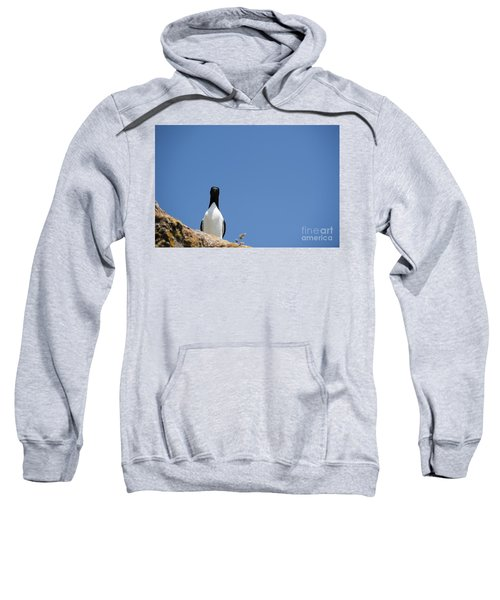 A Curious Bird Sweatshirt