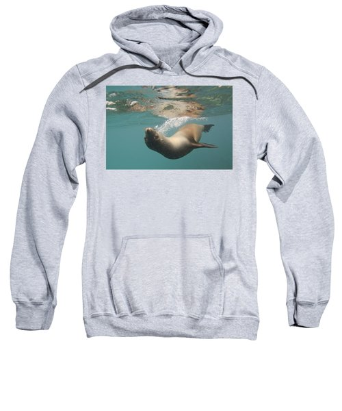 A Sea Lion Swimming Under The Waters Sweatshirt