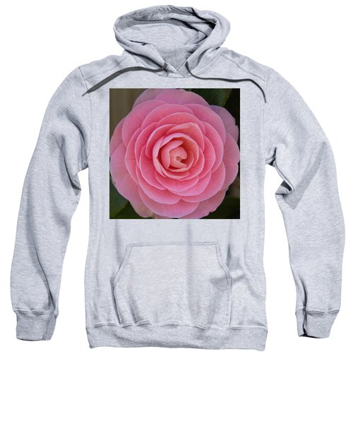 A Soft Blush Sweatshirt
