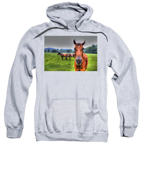 A Starring Horse Sweatshirt by Jonny D