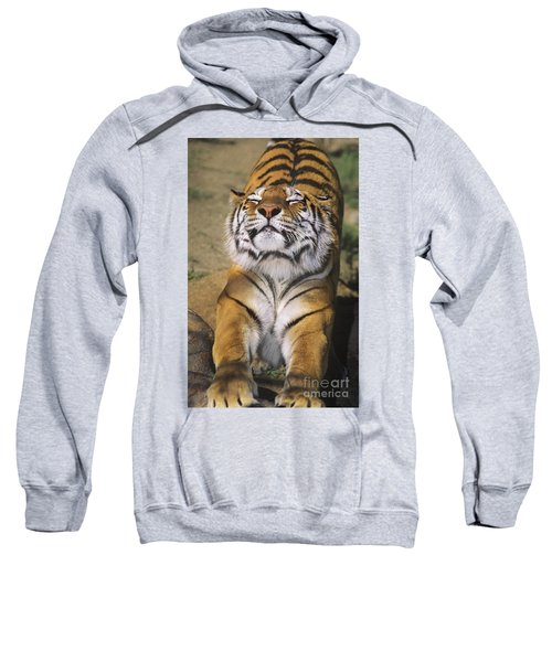 A Tough Day Siberian Tiger Endangered Species Wildlife Rescue Sweatshirt