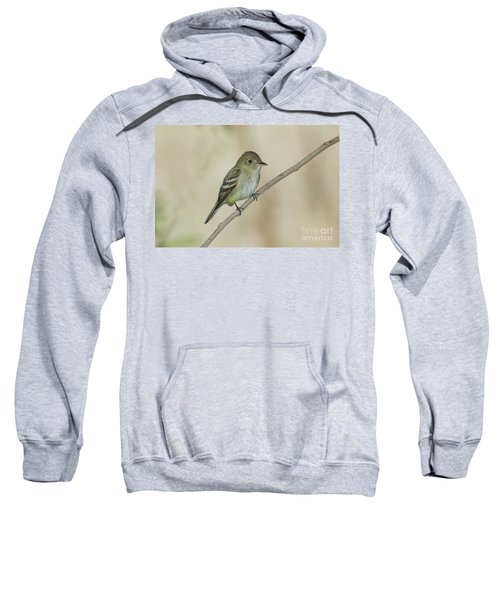 Acadian Flycatcher Sweatshirt by Anthony Mercieca