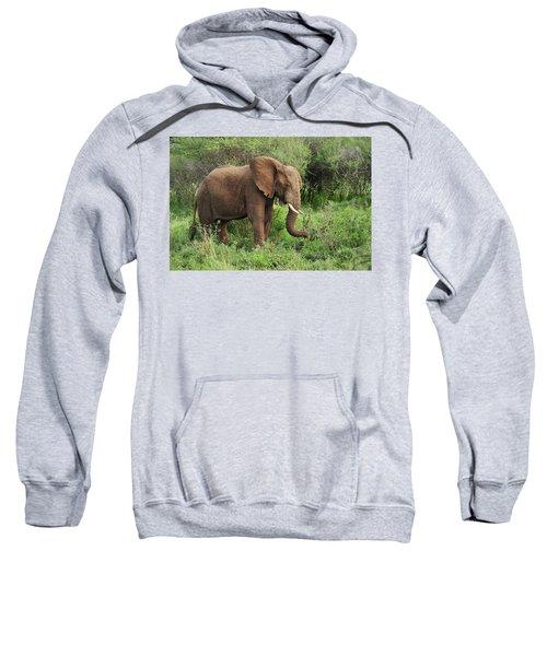 African Elephant Grazing Serengeti Sweatshirt