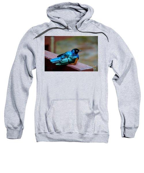 African Superb Starling Bird Rests On Wooden Beam Sweatshirt