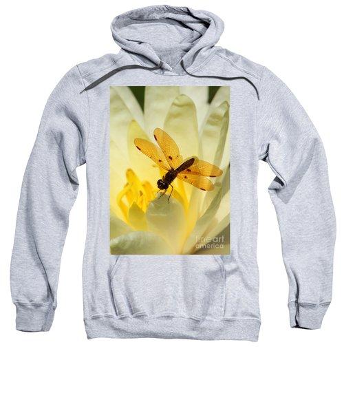 Amber Dragonfly Dancer Sweatshirt