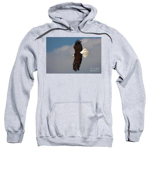 American Bald Eagle In Flight Sweatshirt