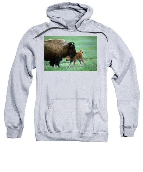 American Bison And Calf Yellowstone Np Sweatshirt