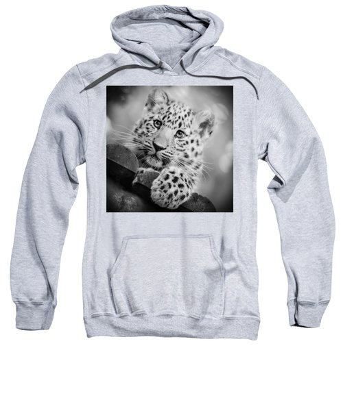 Amur Leopard Cub Portrait Sweatshirt