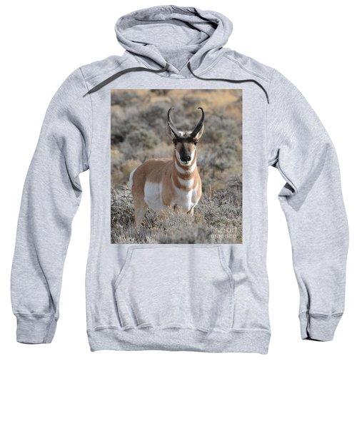 ...and The Antelope Play Sweatshirt