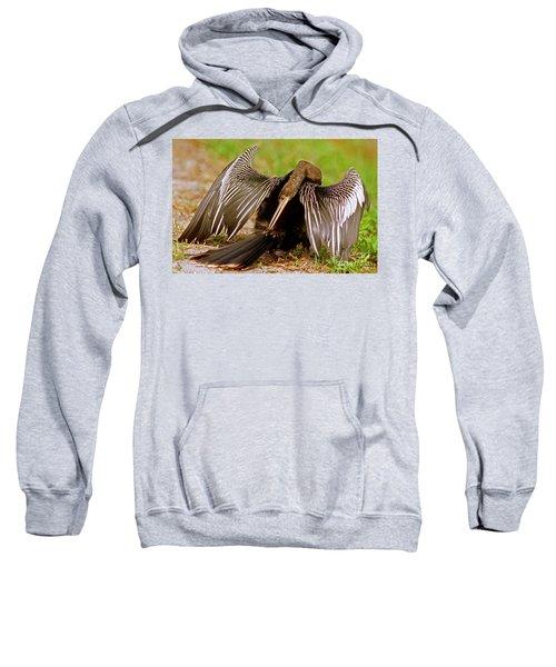 Anhinga Anhinga Anhinga Preening Sweatshirt by Millard H. Sharp