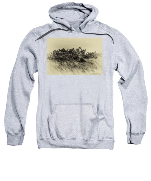 Apollo Beach Grass Sweatshirt