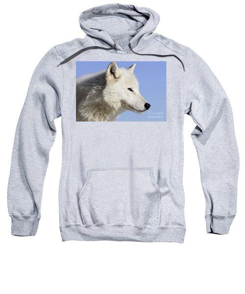 Arctic Wolf, Canis Lupus Arctos Sweatshirt
