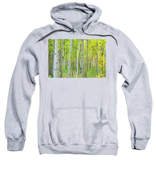 Aspen Tree Forest Autumn Time  Sweatshirt