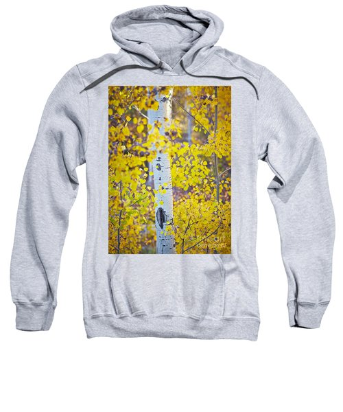 Aspen Tree Yellow Fall Foliage Sweatshirt