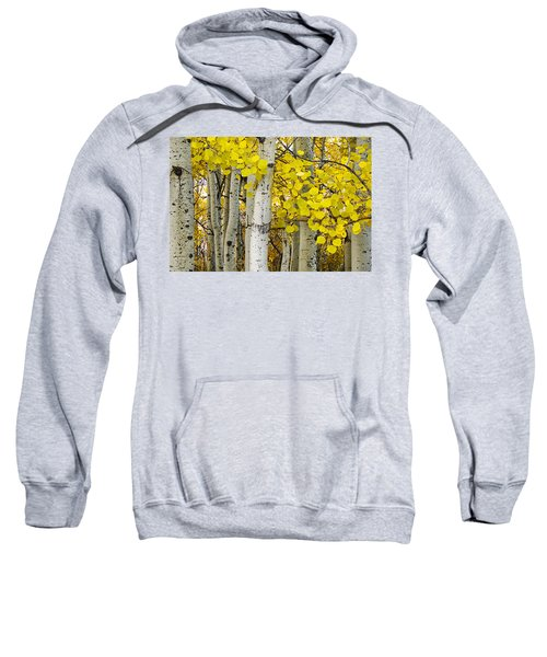 Aspens At Autumn Sweatshirt