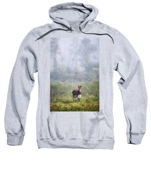 August Morning - Donkey In The Field. Sweatshirt