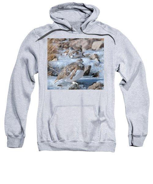 Autumn Plumage White-tailed Ptarmigan Sweatshirt
