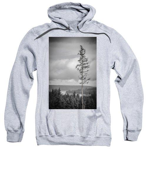 Tall Tree View Sweatshirt