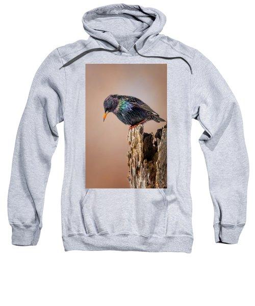 Backyard Birds European Starling Sweatshirt by Bill Wakeley