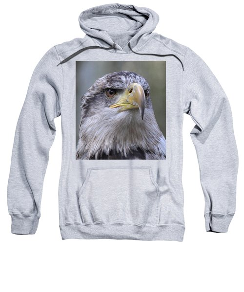 Bald Eagle - Juvenile Sweatshirt