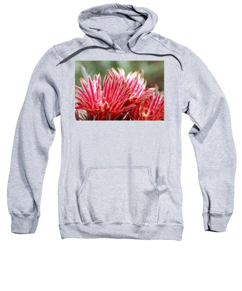 Barrel Cactus Flower Sweatshirt
