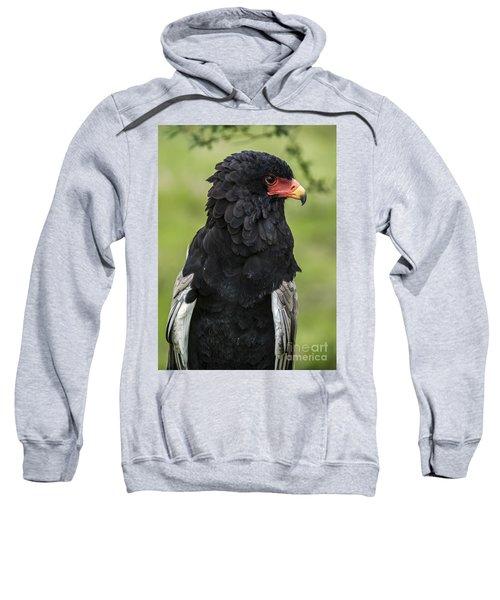 Bateleur 3 Sweatshirt