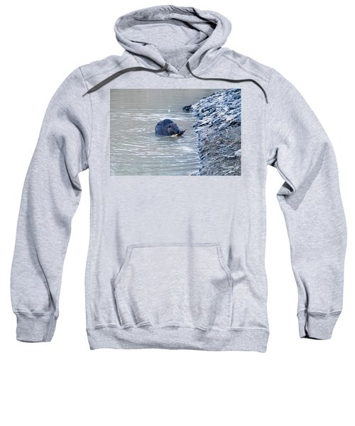 Beaver Chews On Stick Sweatshirt by Chris Flees