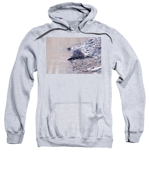 Beaver On Dry Land Sweatshirt by Chris Flees