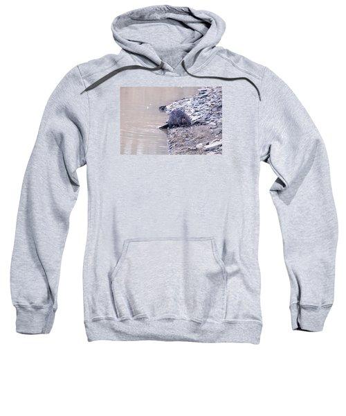 Beaver On Dry Land Sweatshirt by Chris Flees
