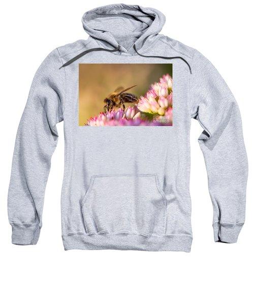 Bee Sitting On Flower Sweatshirt