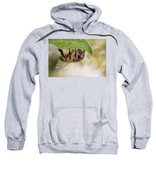 Beeing Upside Down Sweatshirt