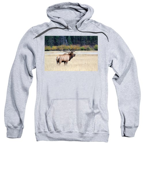 Big Colorado Bull Sweatshirt