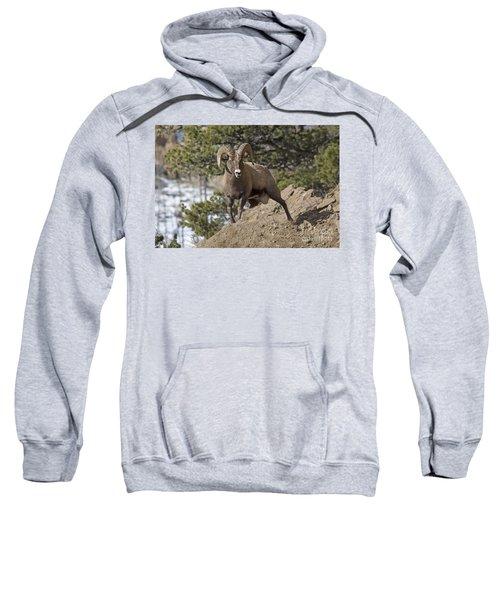 Big Horn Ram Sweatshirt