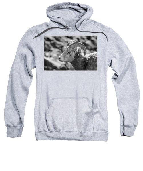 Big Horn Sheep Profile Sweatshirt