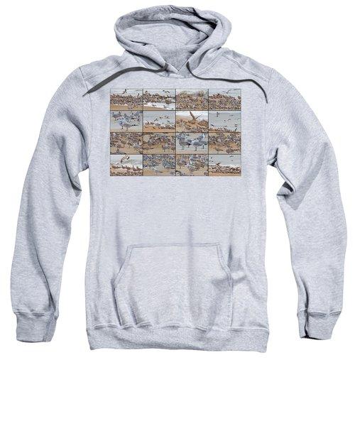 Birds Of Many Feathers Sweatshirt by Betsy Knapp