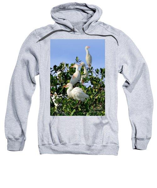 Birds Quartet Sweatshirt