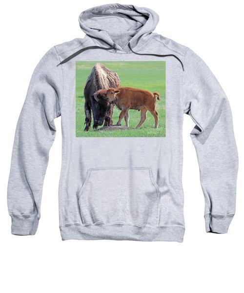 Bison With Young Calf Sweatshirt