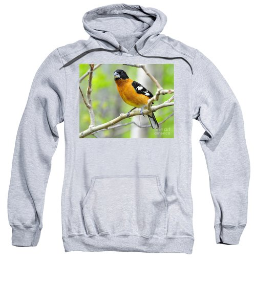 Blach-headed Grosbeak Sweatshirt