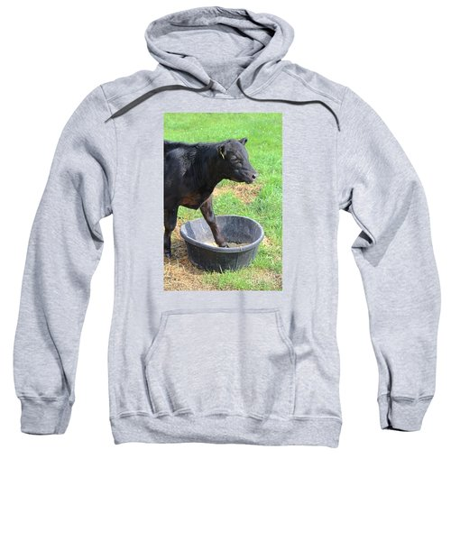 Black Angus Calf Sweatshirt