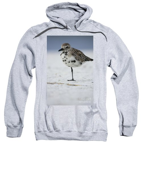 Black-bellied Plover Sweatshirt
